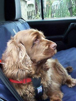 prevleka za sedeže zaščita pred umazanijo umazan pes čist sedež