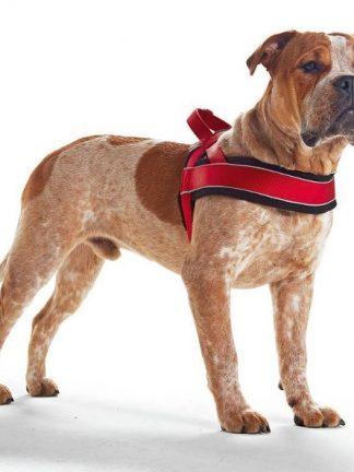 podložena norveška oprsnica za pse podložena s flisom rdeča na psu