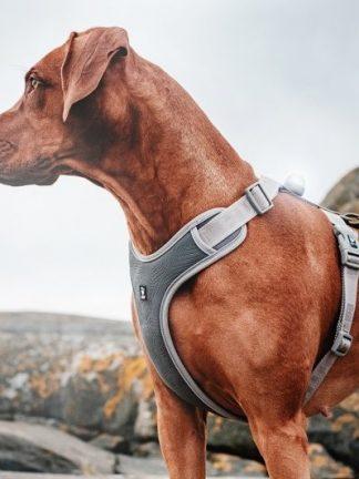 hurtta adventure pasja oprsnica siva na rjavem psu odlična najboljša