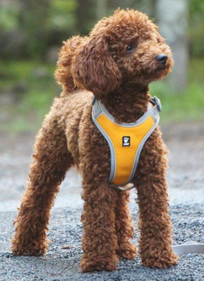 hurtta active pasja oprsnica podložena z nastavkom za lučko najlonska super