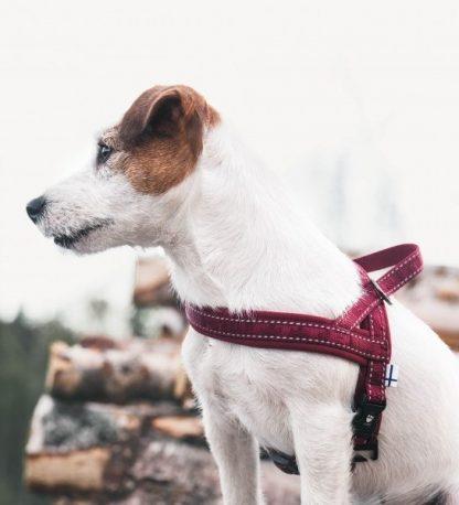 hurtta oprsnica za pse casual rdeča na psu terier