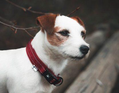 hurtta casual ovratnica podložena rdeča terrier