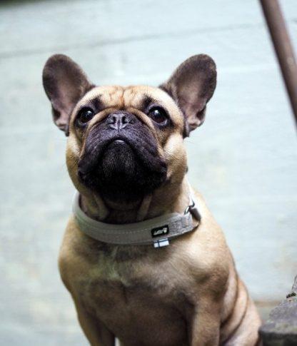 hurtta polzatezna pasja ovratnica podložena lahka trpežna siva francoski buldog