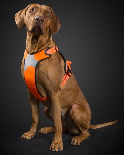 pasja oprsnica reflektivna oranžna z odsevniki fluorescentna na psu