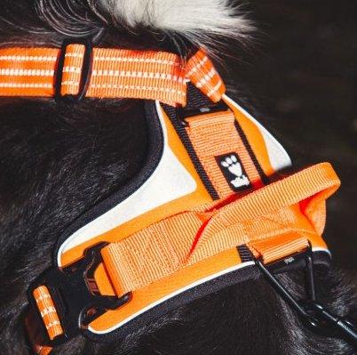 oprsnica za pse oranžna ročaj dvojna klipsna varna vidna z odsevniki