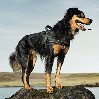 pasja oprsnica z ročajem norveška