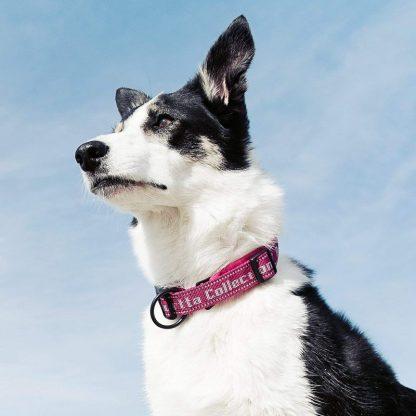 hurtta ovratnica za pse klipsna skozi rinko varna trpežna kvalitetna roza border collie