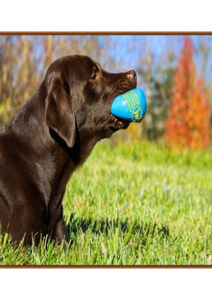 piskajoča pasja žogica