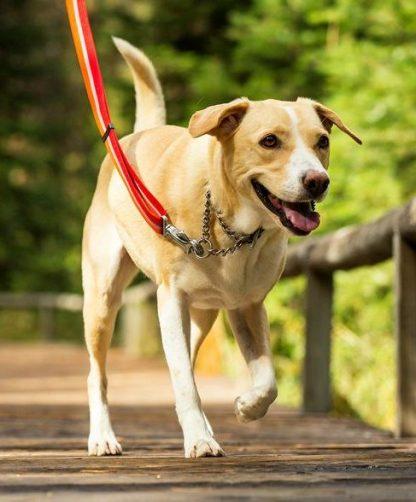 pes na povodcu z polzatezno martingale ovratnico ruffwear chain reaction