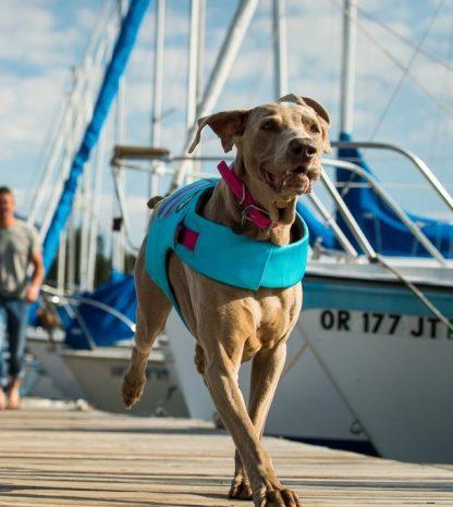 rešilni jopič za pse poletje voda morje jadrnica
