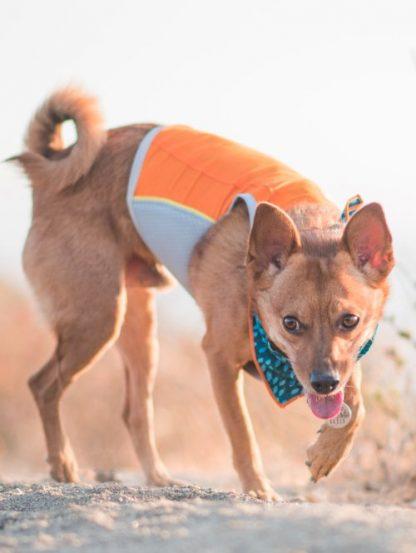 hladilni jopič za pse in mačke jet stream lahek prilagodljiv