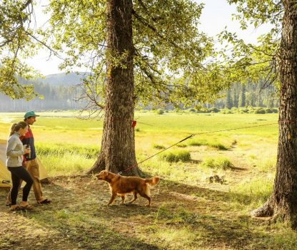 komplet za privez psa na prostem med dve drevesi prikaz zlati prinašalec