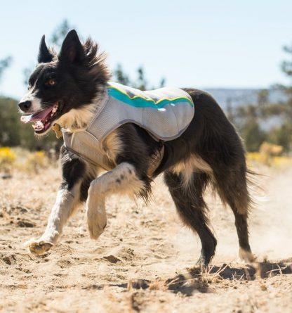 hladilni plašč za pse poleti vročina tek agility
