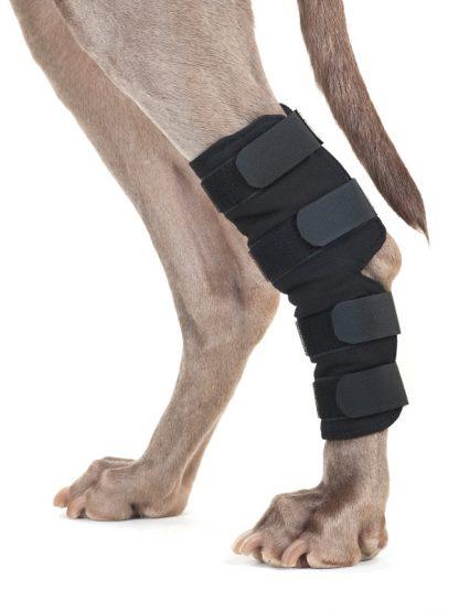 ščitnik za zadnjo tačko za psa back on track