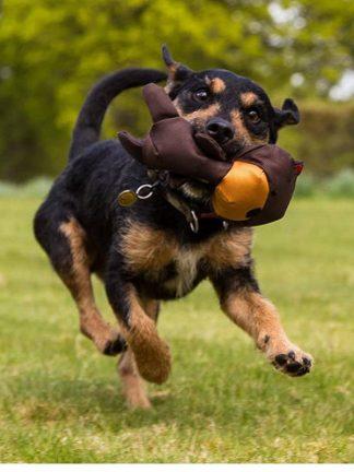 mehka igračka za pse beco pets medvedek