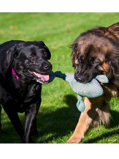 mehka pasja igrača hugglehounds za pse