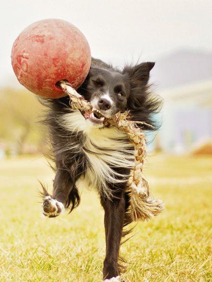 velika žoga na vrvi za pse