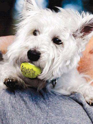 kong teniška žogica za psa, ki piska
