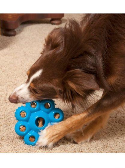 kong pasja igrača star pod