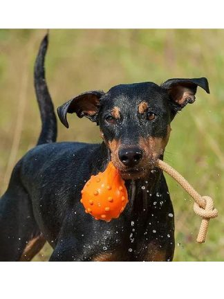 pasja igrača, ki plava na vodi majordog