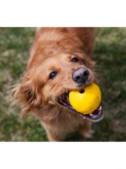 žoga za pse ruffwear trpežna, nenavadne oblike ki se neenakomerno odbija