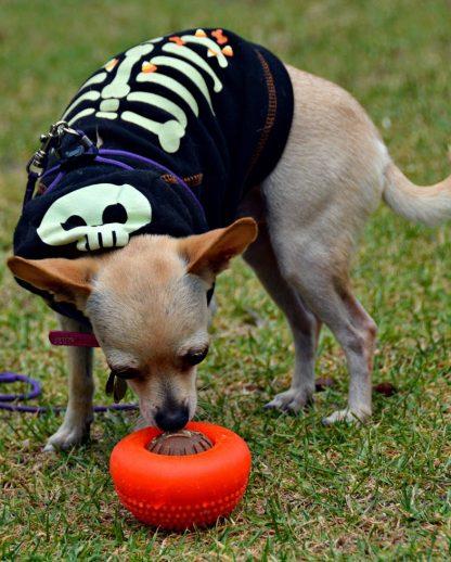 igrača s priboljški za zaposlitev psa