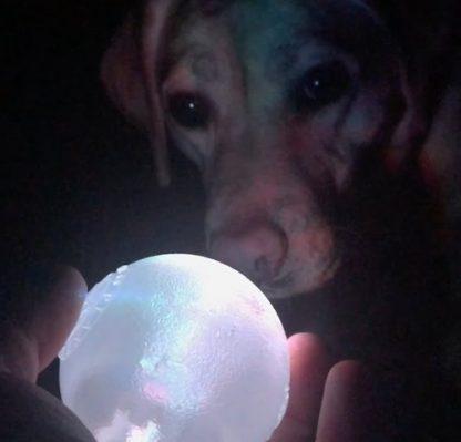 strobe svetleča žoga ponoči v roki zraven pes