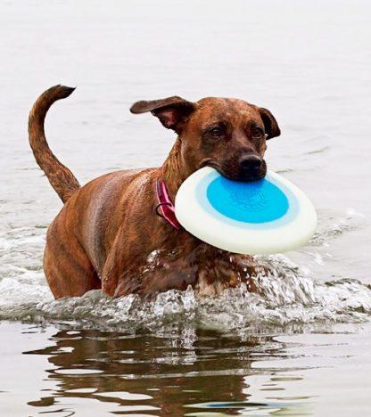 glow in the dark pasji frizbi planet dog pes ga nosi v vodi
