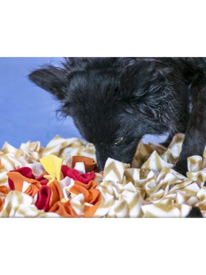 šnofla interaktivna igrača za pse