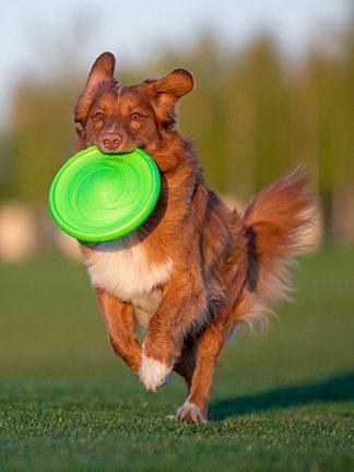 frizbi za psa flyber