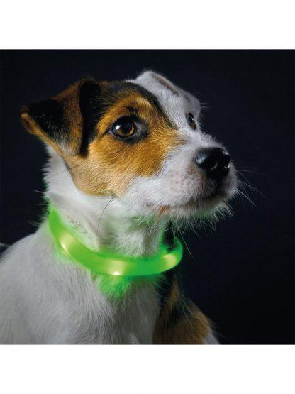 svetleča ovratnica za pse