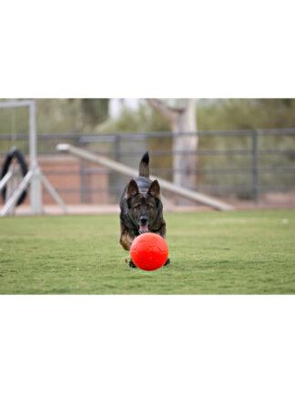nogometna žoga za pse
